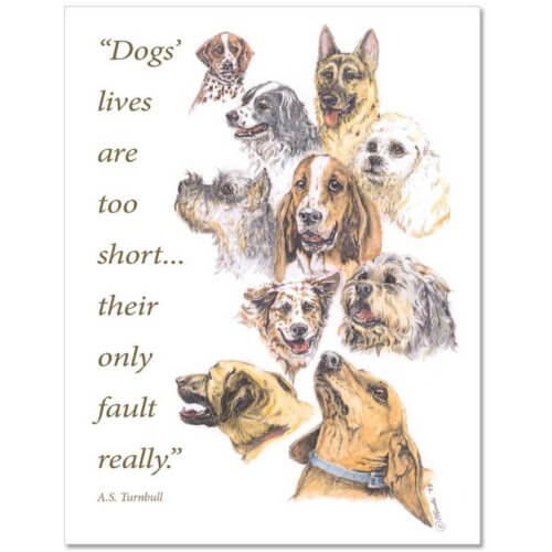 S26 Pet Sympathy Card