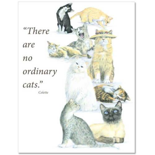S61 Pet Sympathy Card
