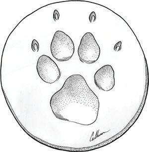 Claypaw drawing